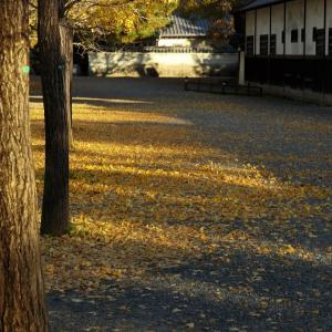 11/23京都御苑で秋