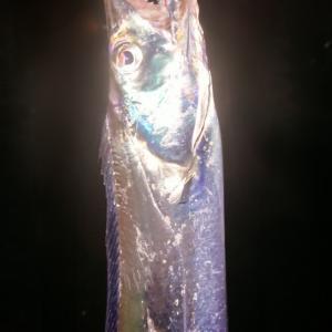 """久しぶりの""""太刀魚ワインド"""""""