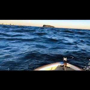 横須賀大津でボート釣り2021-③