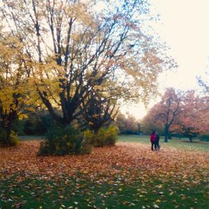 空気は冷たくて、紅葉は暖かい。