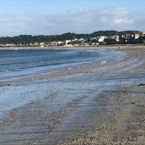 朝の海でさくら貝とシーグラスみっけ!