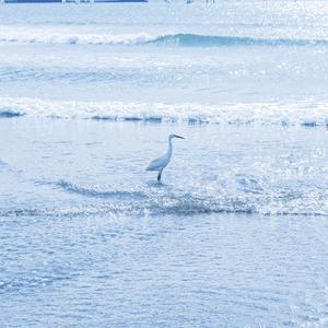 11月の由比ヶ浜海岸