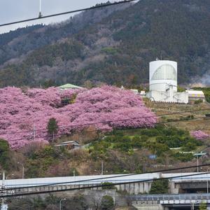 JR東海御殿場線・松田駅から見た松田山