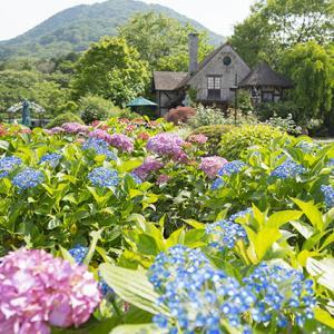 箱根ガラスの森美術館の紫陽花とバラ
