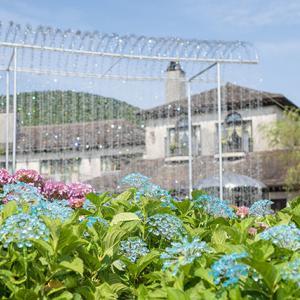 箱根ガラスの森美術館の紫陽花