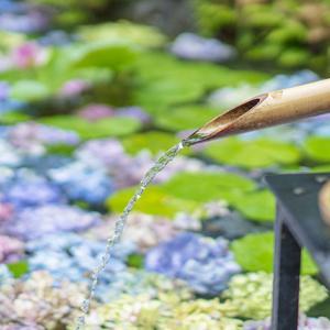 7月初めの鎌倉・長谷寺の紫陽花
