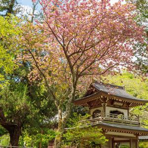 北鎌倉・浄智寺の春