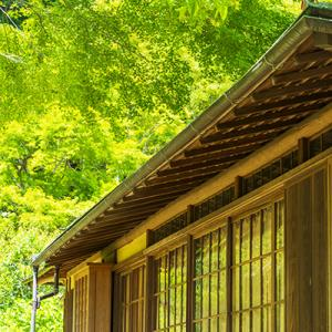 英勝寺の新緑
