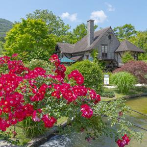 箱根ガラスの森美術館の庭園のバラ
