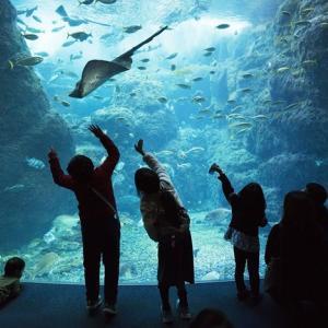 新江ノ島水族館「恋はもっとDeepに」のロケ地に