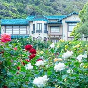 夢の世界へ鎌倉文学館のバラ