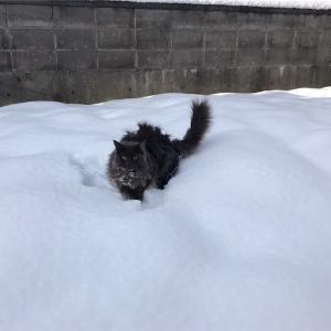 猫とストーブの事件簿(その二)