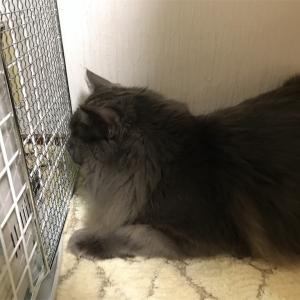 猫とストーブの事件簿 (その一)