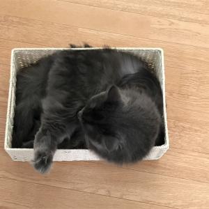 猫だって地震はつらいよ