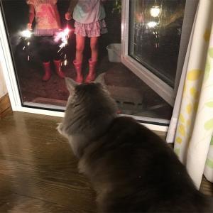初めて見る花火はどうだったかな