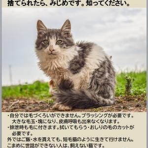 長毛種猫を増やさないで!