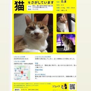 猫を探しています! 京都