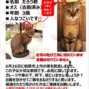 猫を探しています!大阪 柏原市