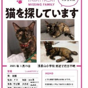 猫を探しています 堺市