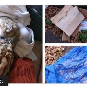 猫虐待事件 奈良
