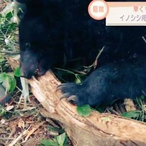 殺される熊たち