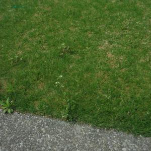 庭と屋根裏と私~♪