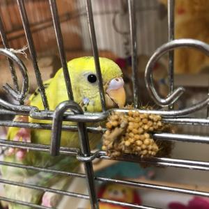 鳥専門医のこと、教えてくださいm(__)m