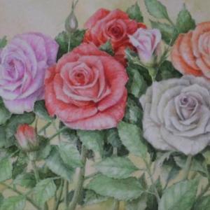 バラ4色 1909