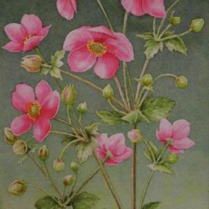 秋明菊 2010
