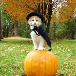 ハロウィンにゃんこ@お楽しみ下さい♪