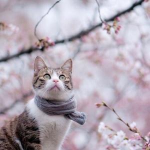 桜も咲いたし近況ご報告