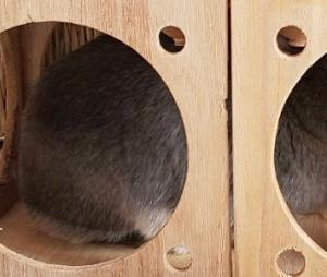 【防寒対策】うさぎの冬支度、教えてください!【うさぎのむっちゃん】【2019秋】