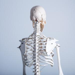 【マニアック】【読書のためのYouTube動画】【骨格系・骨格筋系】新しい人体の教科書・上。【2020春】