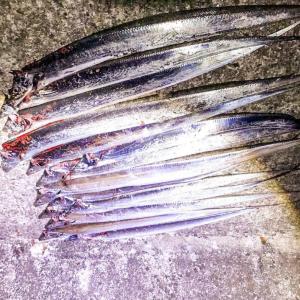"""【阿賀マリノポリス】陸っぱりの堤防から""""探り釣り""""で太刀魚が一番釣れる。「キビナゴキャップ 太刀魚仕掛け」と「タチフロートのかっ飛び太刀魚仕掛けセット」"""