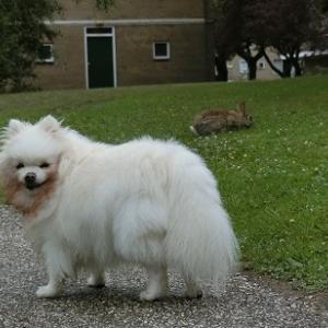 野ウサギさんと