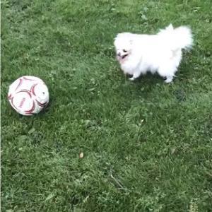サッカーボール ♡