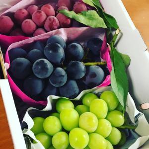 葡萄もらいました
