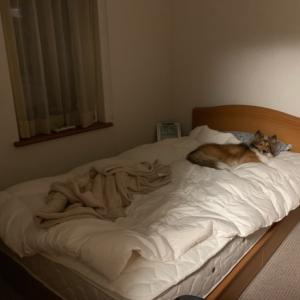 ひとり部屋が欲しい。