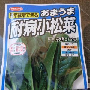 小松菜種まき