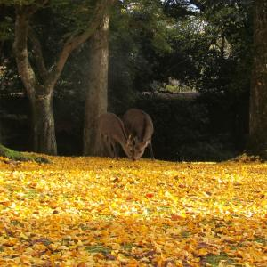 奈良公園 散策 紅葉 ・・・