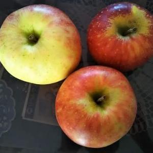 りんごが届いた。