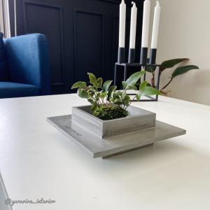 香港発★斬新な花器【greenology】と夏におすすめな苔玉