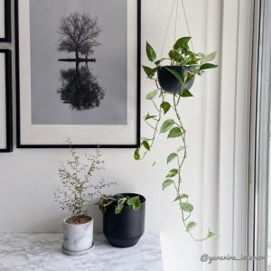 """美しい窓辺…""""メルヘンの木""""とKINTOのハンギングポット"""