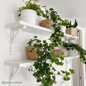 観葉植物の土と入れ替え、IKEAの鉢カバーの話