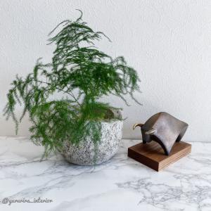 2021年開始♪seccaの干支飾りとスタディデスクの観葉植物