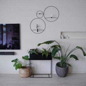 いよいよ生育期♪室内の観葉植物と庭の樹木の肥料について