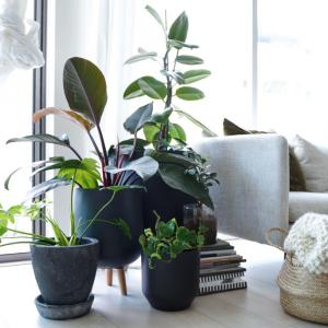 初心者でも失敗が少ないおすすめの観葉植物5選