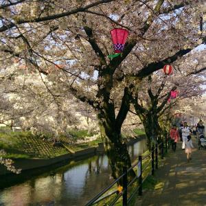 愛知県尾張一宮地方で人気のお花見スポット【五条川の桜】
