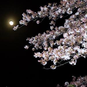桜の季節の終わりに・・・【百十郎の夜桜】