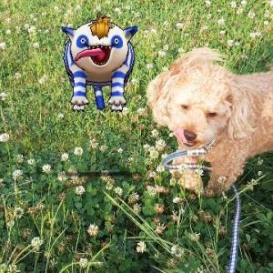 【ほのぼのトイプー日記】草原のトイプーwithドラクエウォーク